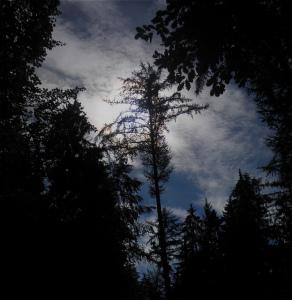 Düsterer Wald