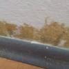 Schimmelpilz an der Wand