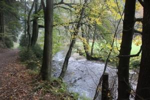Fluss im Elbsandsteingebirge