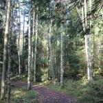 2-1 Brocken Austieg Weg durch Wald
