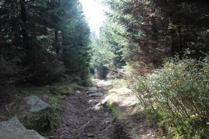 2-7 Wanderpfad Brocken