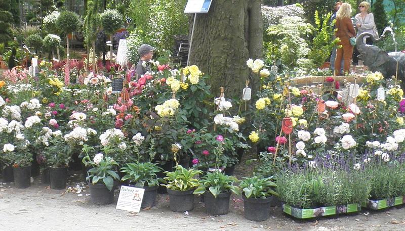 Kraueter und Blumengarten