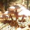 Pilze im Sonnenlicht