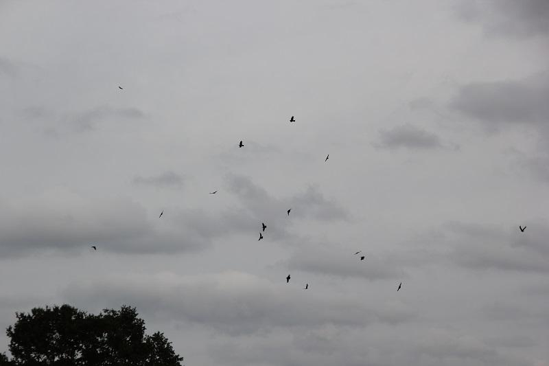 Voegel vor Sturm am dunklen Himmel