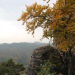 baum-fels-bastei-elbsandsteingebirge