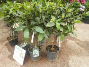 Pflanzen in Kuebeln