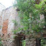 Bewuchs Burg Wendelstein