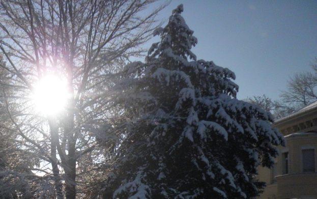 Weihnachtsbaum draussen
