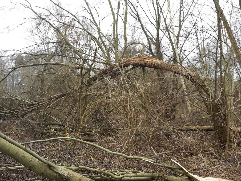 abgeknickter Baum im Wald