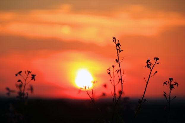 Sonnenuntergang-hinter-Halmen-1