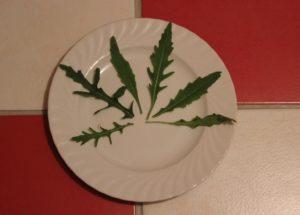 Rucola-Blätter-auf-Teller