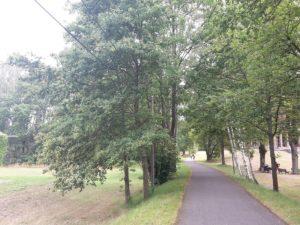 Wege im Spreewald